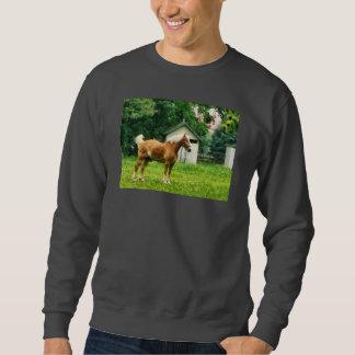 Palomino in Pasture Pull Over Sweatshirts