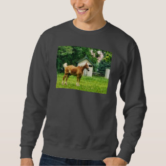 Palomino in Pasture Sweatshirt