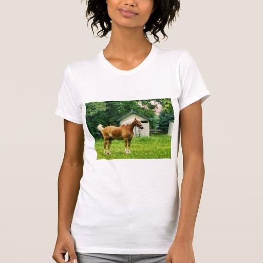 Palomino in Pasture Tee Shirts