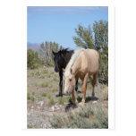 Palomino Mustang Post Cards