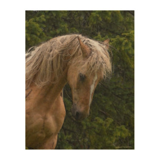 """Palomino Paint at Prayer for """"Year of the Horse"""" Wood Print"""