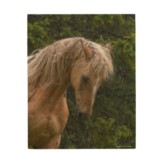 "Palomino Paint at Prayer for ""Year of the Horse"" Wood Wall Decor"