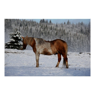 Palomino Paint Horse and Snow Equine Photo Poster