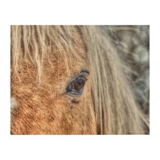 """Palomino Paint Horse Eye for """"Year of the Horse"""" Wood Canvas"""