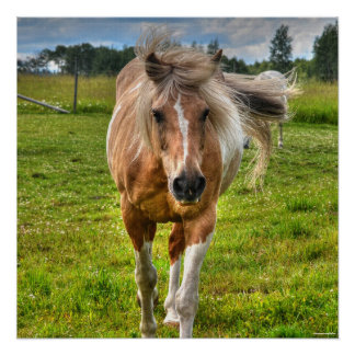Palomino Paint Horse & Field Photo Poster