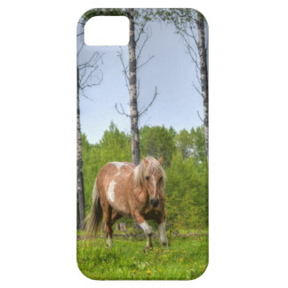 Palomino Paint Horse-lovers Gift Collection iPhone 5 Cases