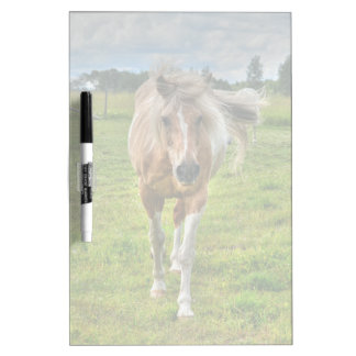Palomino Paint Horse-lovers Gift Collection Dry-Erase Whiteboards