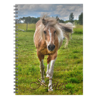 Palomino Paint Horse-lovers Gift Collection Note Book