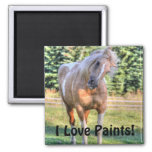 Palomino Paint Pinto Horse Being Cute Refrigerator Magnets