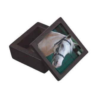 Palomino Paso Fino Premium Gift Box