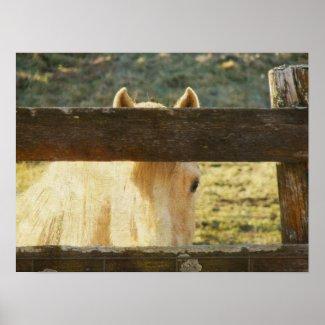 Palomino Peeking Through Fence print