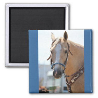 Palomino Pic 2 Inch Square Magnet
