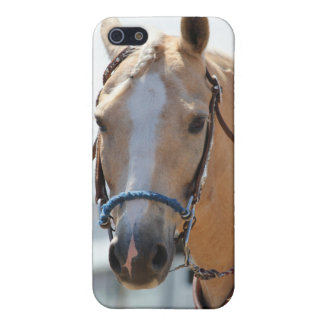 Palomino Pic iPhone 5 Cases