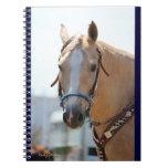 Palomino Pic Spiral Notebooks