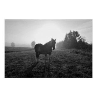 Palomino Pinto Horse at Sunrise Equine B&W Photo Poster