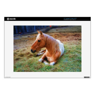 Palomino Pinto Horse Resting Artwork Decals For Laptops