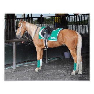 Palomino Pony at Belmont Park Photo Print