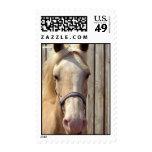 Palomino Pony Postage Stamp