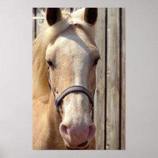 Palomino Pony Poster Print