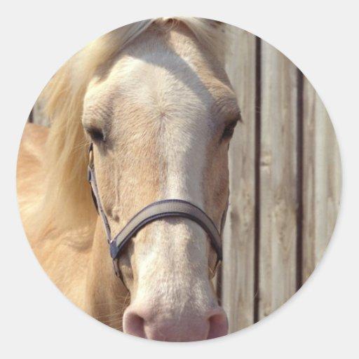 Palomino Pony Stickers