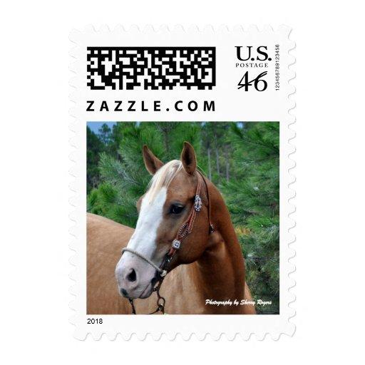 ~Palomino~ Postage Stamp