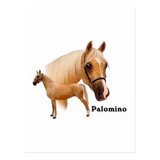 Palomino Postcard