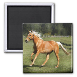 palomino power 2 inch square magnet