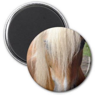 Palomino Quarter Horse Round Magnet Refrigerator Magnet