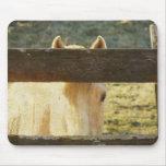 Palomino que mira a escondidas a través de la cerc tapete de raton