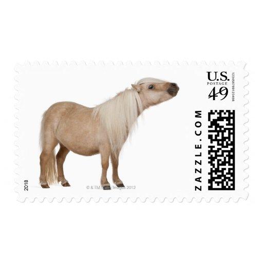 Palomino Shetland pony - Equus caballus (3 years Stamp