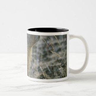 Palouse Falls State Park Two-Tone Coffee Mug