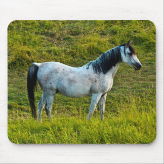 Palouse horse, Colfax, Palouse Area, Washington Mouse Pad