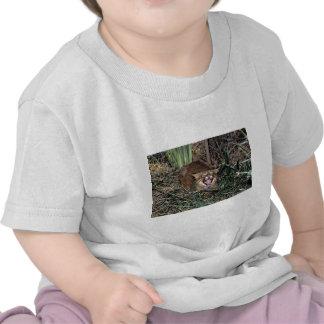 Pampas cat (Felis colocolo) T-shirts