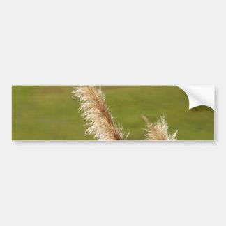 Pampas Grass Bumper Sticker