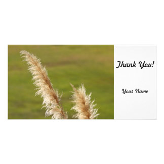 Pampas Grass Card