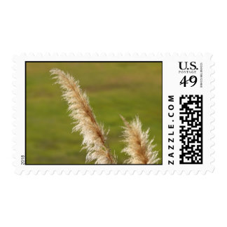 Pampas Grass Postage