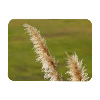 Pampas Grass Rectangular Photo Magnet