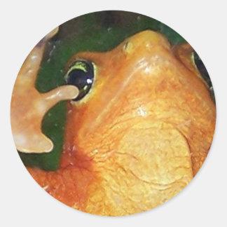 panamanian golden frog classic round sticker
