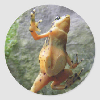 Panamanian Golden Frog Classic Round Sticker