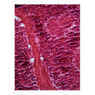 Pancreas Cells under the Microscope Postcard