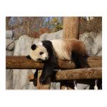 panda101 postal
