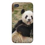 panda107 iPhone 4 cobertura