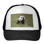 panda109 gorra