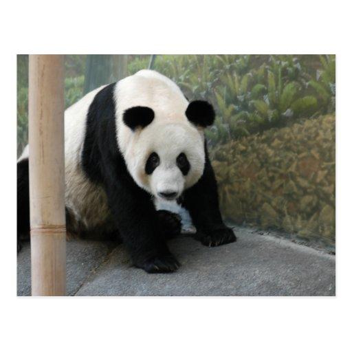 panda110 postal