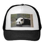panda112 gorras