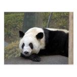 panda112 postal