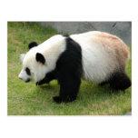 panda115 postal