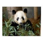 panda117 postal