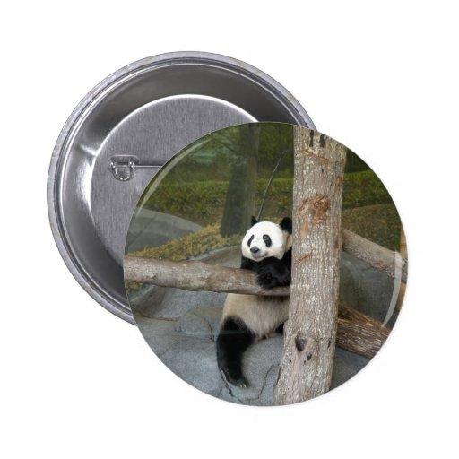 panda122 pin