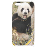 panda1-00354